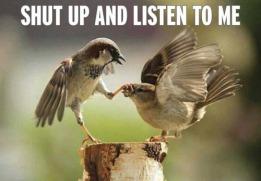 shut-up-birds